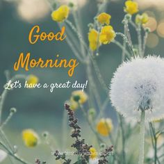 GoodMorning. Let's have a great day!