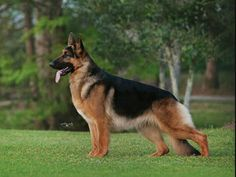 2015 Westminster dog show, best of breed and best in group and show