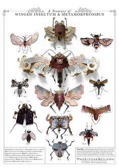 A Treasury of Winged Insectum & Metamorphosibus