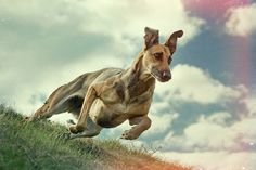 70s action by Elke Vogelsang on 500px