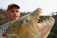 #fishinglife #paradisoinsurance Real Sea Monsters, River Monsters, Fishing Life, Best Fishing, Tiger Fish, Congo River, Facts About Fish, Jeremy Wade, Fish List