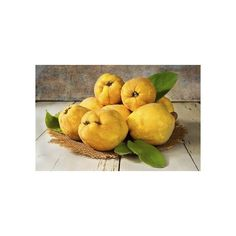Chinese Quince Bonsai Seeds  1,45€   Chinese Quince Bonsai Seeds(Chaenomeles sinensis) Price for Package of 2 seeds. Chaenomeles are much beloved for bonsai because of their tiny, lovely flowers, and in spite of their prickly thorns. Most varieties flower before leafing out, sometimes as early as January, and may continue to flower for a long time following. The fruit is yellow and large, too hard to be edible, but