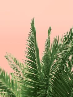 Tropical Pink Palm Tree Fine Art Photograph by WilderCalifornia