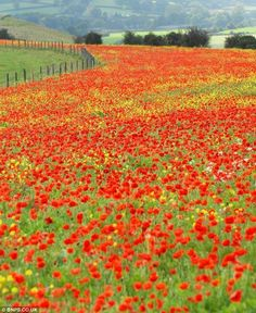 Flanders Field, an infamous standoff between the two armies of WW1