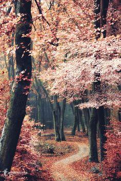 woodendreams: (by Lars van de Goor)  Dios que hermoso y mágico se ve este paisaje. ¡increíble captura!