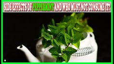 Mint is a widely used herb and has varied health benefits when consumed through tea or in aromatherapy. Peppermint oil has a calming effect, which combined with its mild antibacterial and antiviral powers, makes it useful for treating a variety of health conditions. But excessive use of peppermint tea, peppermint oil or the herb can cause some side-effects. So check for these symptoms before using peppermint as a herbal remedy. #besthomeremedies #peppermint #peppermintsideeffects