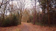 Hilversum forest