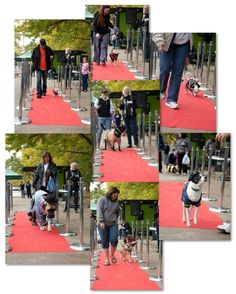 Pups on the Red Carpet