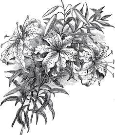 Vintage Easter Lily Image
