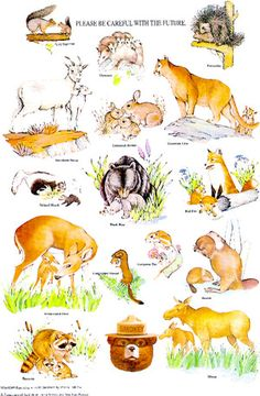 The educational nature poster series from Smokey Bear.: Smokey Bear's Baby Wildlife Animal Poster