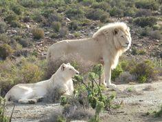 Sanbona Wildlife Reserve (Montagu) - 2018 All You Need to Know Before You Go (with Photos) - TripAdvisor Polar Bear, South Africa, Trip Advisor, Wildlife, Photos, Animals, Pictures, Animales, Animaux