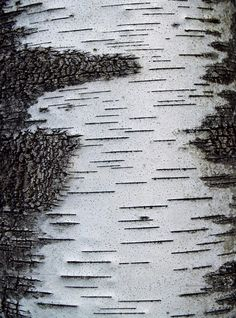 Silver birch tree bark textures; cracked line patterns in nature; two-tone texture inspiration                                                                                                                                                      More