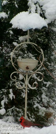 Cardinal at the feeder  (Garden of Len & Barb Rosen) http://ourfairfieldhomeandgarden.com/its-time-to-feed-the-birds/