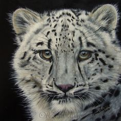 Snow White - snow leopard wildlife oil painting, painting by artist Anne Zoutsos