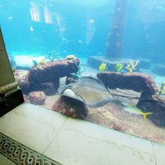 25 Best Things to do in Atlantis Bahamas Resort