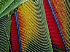 patterns in bird nature
