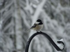 Bird song in winter at Marywood Spirituality, Songs, Bird, Winter, Animals, Animais, Animales, Animaux, Birds