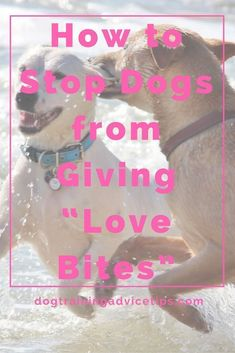 How to Stop Dogs from Giving Love Bites Dog Training Tips Dog Obedience Training Dog Training Commands via Puppy Training Tips, Best Dog Training, Potty Training, Training Online, Training Schedule, Training Videos, Training Classes, Agility Training, Training Academy
