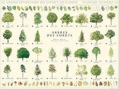 Vintage poster: forest trees