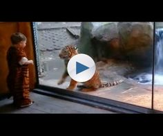 Parents attempt to have their son raised by tigers.