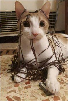 イタズラが過ぎる猫