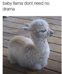 Sick of Drama