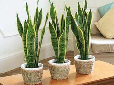 Die besten Zimmerpflanzen  - http://wohnideenn.de/gartenarbeit/11/die-besten-zimmerpflanzen.html  #GartenPflanzen