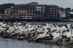 Monterey  sea area - photo by Roberto Viva -