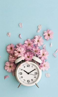 Stock photo of Alarm clock and cherry blossom by RuthBlack is part of Clock wallpaper - Cherry Blossom Wallpaper, Pastel Wallpaper, Tumblr Wallpaper, Flower Wallpaper, Clock Wallpaper, Screen Wallpaper, Iphone Wallpaper, Rose Background, Flower Backgrounds