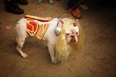 Lady Gaga er Dog-Da?