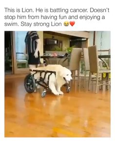 We love you lion 😭 Via IG: Source by DGBreeds dog dog memes dog videos videos wallpaper dog memes dog quotes dogs dogs pictures dogs videos puppies puppy video Cute Animal Videos, Funny Animal Pictures, Funny Dog Memes, Funny Dogs, Cute Funny Animals, Cute Baby Animals, Baby Elefant, Cute Dogs And Puppies, Doggies