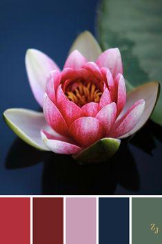 ZJ Colour Palette 716 #colourpalette #colourinspiration