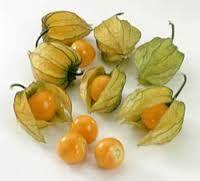 PHYSALIS (Lampionplant), ook wel bekend als Kaapse kruisbes, komt oorspronkelijk uit Midden- en Zuid-Amerika. De vrucht is verwant aan de tomaat, maar helemaal niet aan de kruisbes terwijl de gemeenschappelijke naam wel doet vermoeden. De vrucht is een kleine ronde bes, ongeveer de grootte van een knikker, vol kleine zaadjes. Rijpe physalis is felgeel en erg zoet, waardoor het een ideaal ingrediënt is voor taarten en voor het maken van jam.
