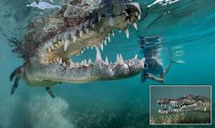 Jaw-dropping moment daredevil father takes daughter swimming with 8ft crocodile at