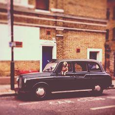 """...il """"fido"""" taxi di Camden Town, London UK"""