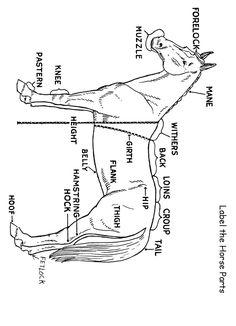 Homeschool Helper Online's Free Label the Horse Answers Worksheet Worksheet