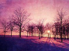 landscape photography- nature photo- surreal- trees-purple- sunset- Before The Night fine art photograph 8x10. via Etsy.