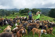 Welcome to the Land of a Thousand Stray Dogs