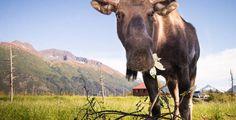 Alaskan Photography Tours (Photo Credit: Through the Lens Alaska LLC)
