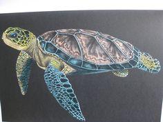 Sea Turtle by Hermien Mars