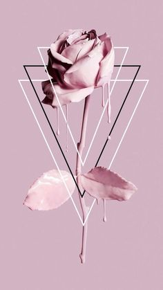 Fondos de iPhone y Android: Paintdripping Rose Wallpaper para iPhone y Andro . - iPhone and Android Wallpapers