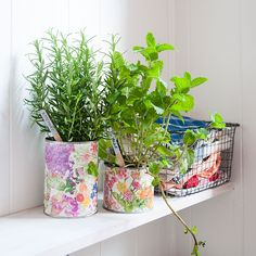 Tin Can Herb Planters - Design*Sponge for Mrs. Meyer's Clean Day |  Reroute your tin cans from the recycling bin and transform them into pretty planters for fresh herbs.