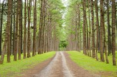 Types Of Trees 101 [All You Need To Know] Diy Garden Projects, Need To Know, Country Roads, Type