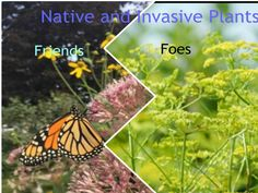Ontario Native and Invasive Plants: Friends and Foes Bee City, Carleton University, Invasive Plants, Insect Pest, 3 Pm, Island Park, Ottawa, Ecology, Conservation