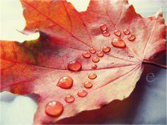 autumn rain. by einfachso