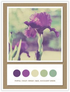 I feel relaxed just looking at this color palette. I need a bathroom or a craft space these colors... need I tell ya! Purple iris and green