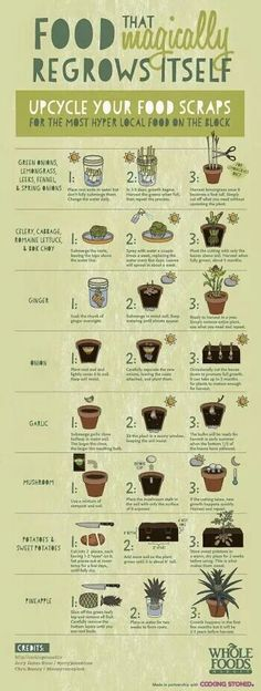 Personal Life: Along with my love for house plants, I also love growing vegetables. This is a great way to upcycle your old food scraps and be a little more sustainable with your food. Indoor Garden, Garden Plants, Outdoor Gardens, Herb Garden, Vege Garden Ideas, Micro Garden, Plants Indoor, Organic Gardening, Gardening Tips