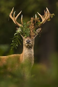 Nature's Home photography masterclass: the red deer rut - Natures Home magazine uncovered - Our work