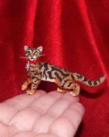 7 Best Toyger Kitten I Will Have One Images Cats Toyger