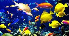 Most Exotic Fish for Aquariums